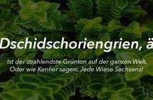 sächsischen