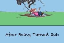 Equine humour