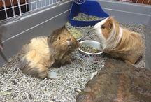 Three little pigs / My piggies are turning 3 soon