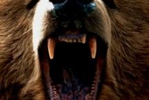 Ah! Bears! / by Emily Garin