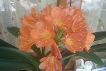 My_flowers