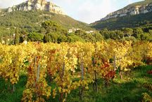 AOC Cassis Provence / Grape varieties are grown exclusively within town limits on terraced parcels, sheltered by the Cape Canaille from the Mistral winds. 12 winemakers produce principally white and rosé in this exceptional setting.