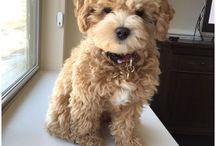 new pet Franky / Lola / Kiki /