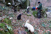 Bucsek Henrik Emlékút / 2015.11.29-én megtartottuk az első via ferrata túránkat a Cuha-völgyben. Gyönyörű időnk volt és nagyszerűen éreztük magunkat. Legközelebb várunk Téged is! http://www.vasaltutak.hu/via-ferrata/cuha