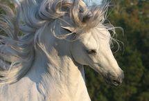 Kdo miluje koně a jiná zvířata? / Tato nástěnka se týká toho kdo má rád zvířátka . Pokud máš rád zvířata a koně tak se přidej , ale pokud zvířátka a koně rád nemáš tak sem nepatříš!!!UŽÍJTE SI TO!!!!!!!☺☻