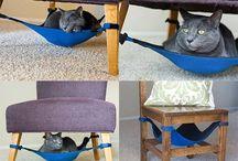 Poezelig / Poezen katten cats katachtige
