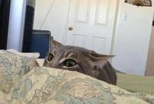 your kitten me