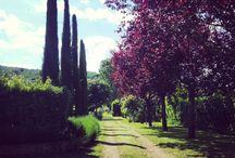 Fiorella's Garden - L'orto giardino di Fiorella