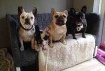 French Bulldogs / My kids