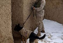 #War Dogs