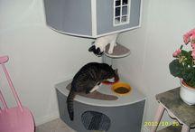 Kočky :-)