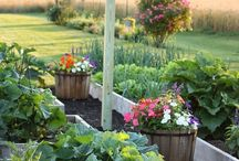 ogród - garden - fruits flowers / wszystko co dotyczy ogrodu