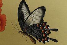 민화.나비