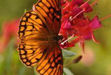 Butterflies / by Robyn Wallace