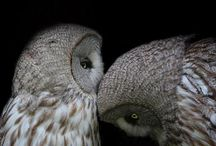 Owls / by Lesley Couch