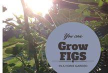 Spain Hill Farm:  Gardening