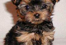 Puppies & Friends