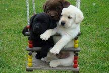 Puppy ♡☆♡
