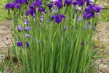 My Garden Flower Wishlist