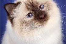 Dream cat / My one day cat!!!