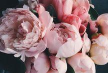 blommor.