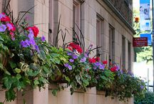 Flower Window Boxes / by Hikia Dixon