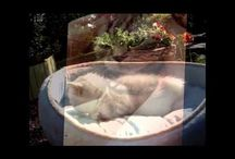 Funny Animals / Funny Animal Videos :-)