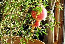 Planting / Gardening goods