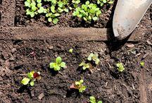 Gardening / Garden Ideas