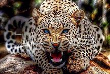 Animale ₩
