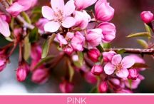 Color - Pink / Brighter pinks are youthful, fun, and exciting, while vibrant pinks have the same high energy as red; they are sensual and passionate without being too aggressive. Toning down the passion of red with the purity of white results in the softer pinks that are associated with romance and the blush of a young woman's cheeks. It's not surprising that when giving or receiving flowers, pink blossoms are a favorite. Pink is the color of happiness and is sometimes seen as lighthearted.