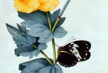 Desenhos Botânicos e Orgânicos