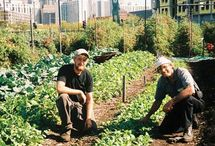 Garden ~ Urban Farming / by Organic Gardens Network™
