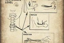 Anatomice