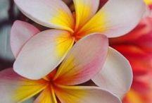 Hawaii / by Deen W.