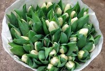 Flower Varieties {White/Cream Flowers} / Looking to buy some white flowers...contact the Flowermonger!