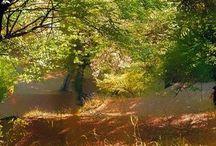 Ascultă poemul dimineții la Radio Frecvența / http://frecventa.falezedepiatra.net/