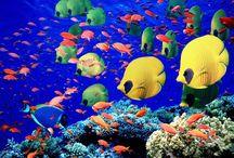 Beautiful Marine Animals <3 / Amazing marine animals of the world.