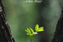 quote's nature