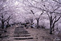 JAPON / Sitios para visitar / by Mari Sedano