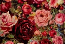 Rose ❤️