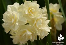 Beautiful bulbs! / Perennial and naturalizing bulbs for Texas spring, summer and winter