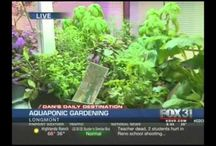 Aquaponics / Growing fish and plants in aquaponics