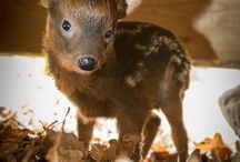 Cute Animals / by Annette Foster
