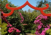 Azalea Extravaganza / Enjoy the blooms of more than 250,000 vibrant azaleas in an explosion of color throughout the 65 acres of Bellingrath Gardens. For peak times of the azalea blooms, please check Azalea Watch on our website starting March 1.