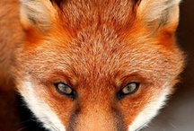 Foxes and Octopuses and Owls, oh my / Animal board