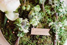 Otthoni növények / Indoor Plants