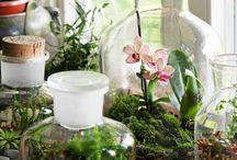 ogród szklany