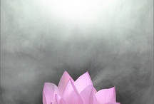 Love of a Lotus