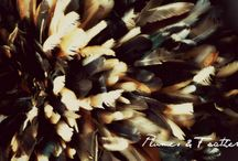 Plumes & Feathers / My fashion / art / design / architecture tumblr